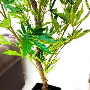 Fake Cannabis Plant | CannaPlant